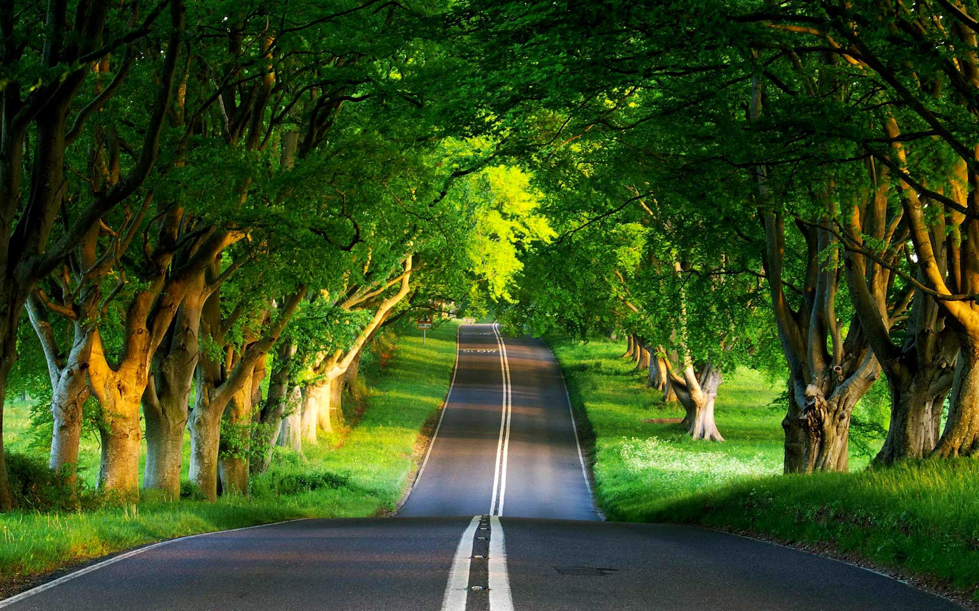 green-road-1920x1200-wallpaper-3774